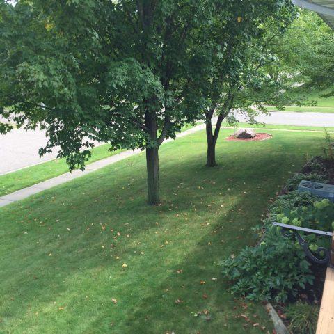 Side yard - Flower Garden